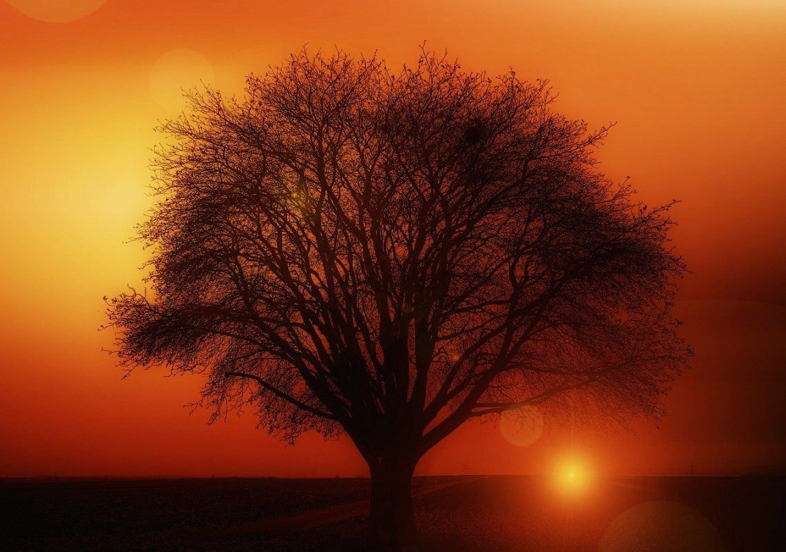 tree, solitary, sunset